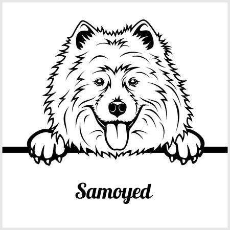 Samoyed - Peeking Dogs - - breed face head isolated on white