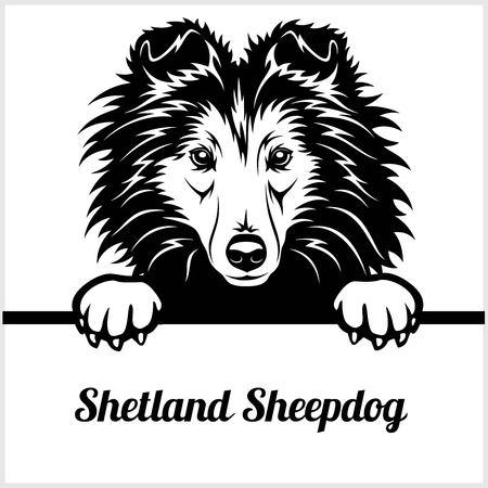 Shetland Sheepdog - Peeking Dogs - - breed face head isolated on white