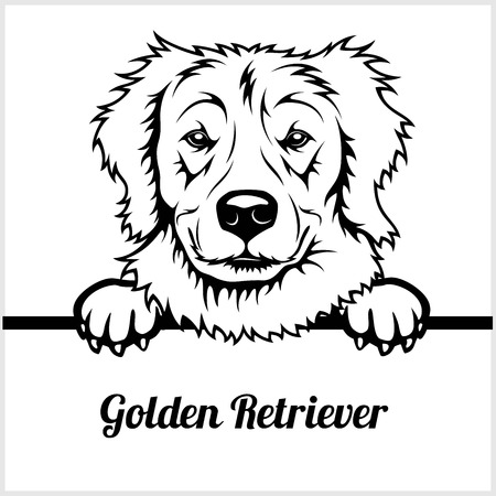 Golden Retriever - Peeking Dogs - - breed face head isolated on white  イラスト・ベクター素材