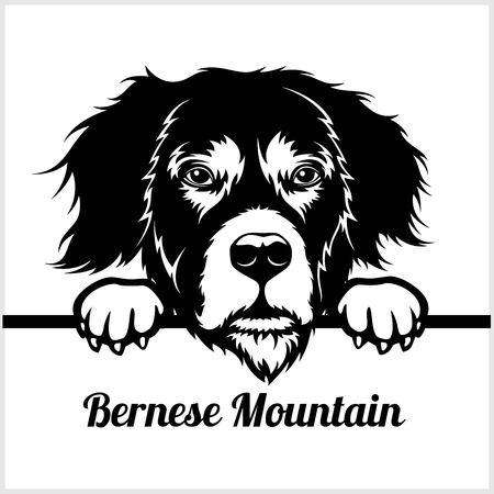 Bernese Mountain - Peeking Dogs - - breed face head isolated on white
