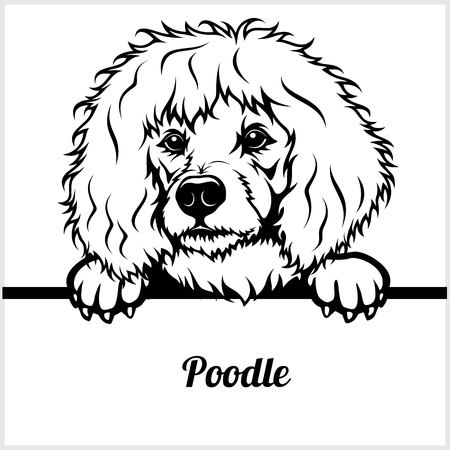 Poodle - Peeking Dogs - breed face head isolated on white