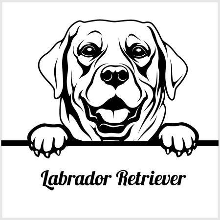 Labrador Retriever - Peeking Dogs - - breed face head isolated on white Illustration