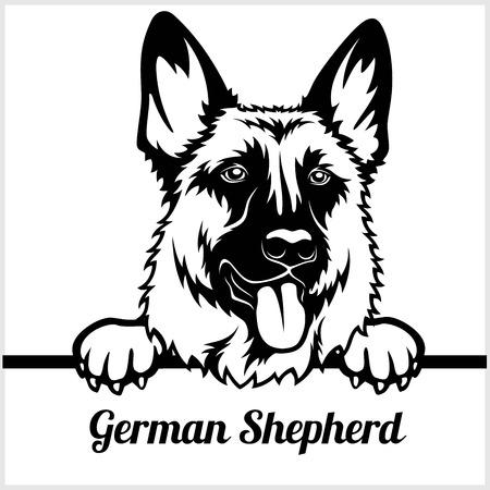 Pastor Alemán - perros que miran a escondidas - - cabeza de la cara de la raza aislada en blanco Ilustración de vector