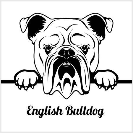 English Bulldog - Peeking Dogs - - breed face head isolated on white