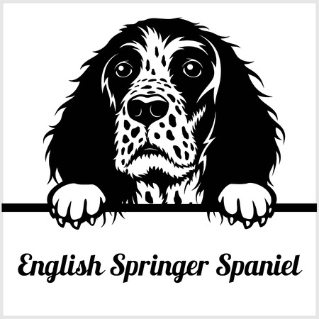 English Springer Spaniel - Peeking Dogs - - breed face head isolated on white