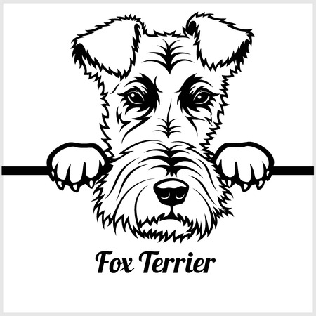Fox Terrier - Peeking Dogs - - breed face head isolated on white