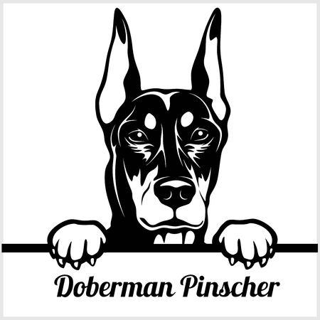 Doberman Pinscher - Peeking Dogs - - breed face head isolated on white Vettoriali