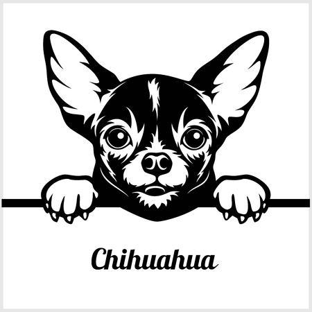 Chihuahua - Spähende Hunde - - Rassengesichtskopf isoliert auf weiß