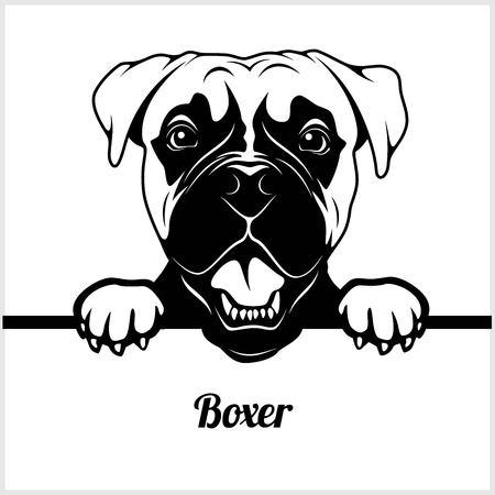 Boxer - Perros que miran a escondidas - - cabeza de la cara de la raza aislada en blanco Ilustración de vector