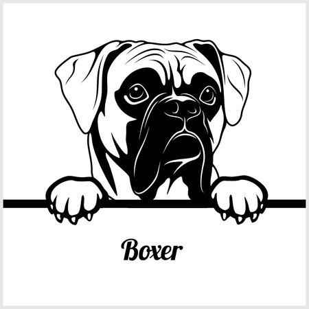 Boxer - Perros que miran a escondidas - - cabeza de la cara de la raza aislada en blanco