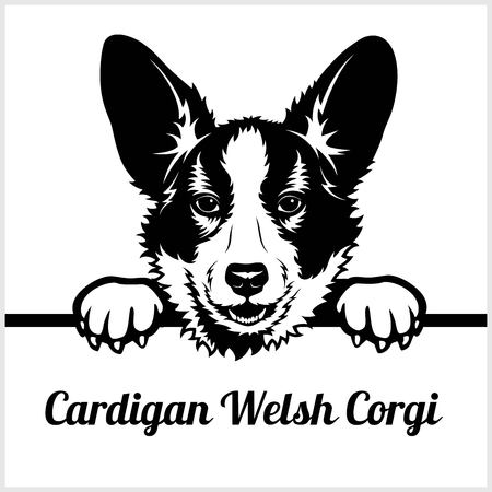 Cardigan Welsh Corgi - Peeking Dogs - - breed face head isolated on white