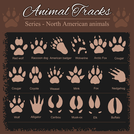 Animal Footprints - North American animals 版權商用圖片