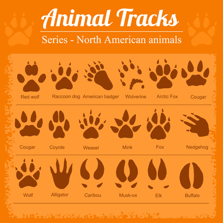 Animal Footprints - North American animals