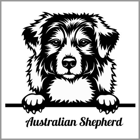 Australian Shepherd - Peeking Dogs - breed face head isolated on white Stock Illustratie