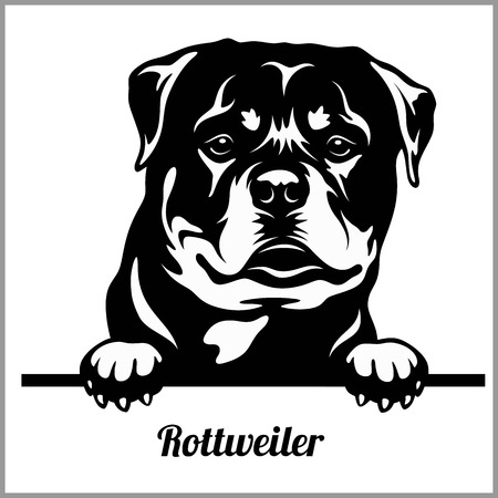 Rottweiler - Peeking Dogs - breed face head isolated on white