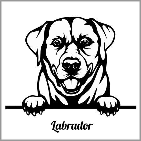 Labrador - Peeking Dogs - - breed face head isolated on white Illustration