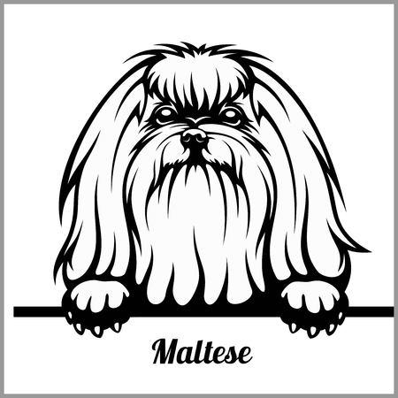 Maltese - Peeking Dogs - - breed face head isolated on white Ilustração Vetorial
