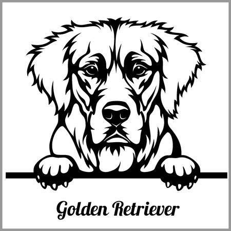 Golden Retriever - Peeking Dogs - - breed face head isolated on white
