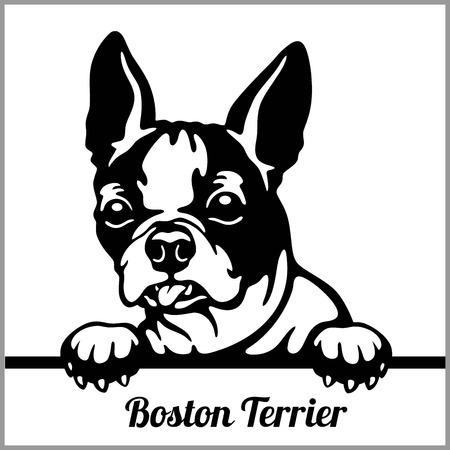 Boston Terrier - Peeking Dogs - - breed face head isolated on white Illustration
