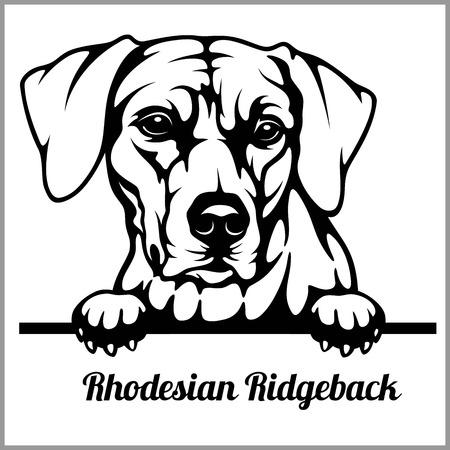 Rhodesian Ridgeback - Peeking Dogs - - breed face head isolated on white