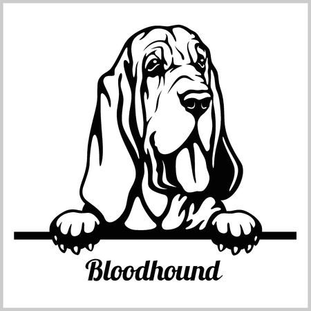 Bloodhound - Peeking Dogs - breed face head isolated on white 矢量图片