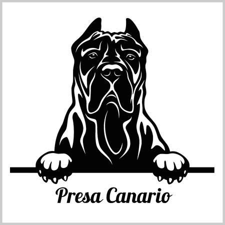 Presa Canario - Peeking Dogs - breed face head isolated on white 向量圖像