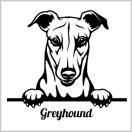 Greyhound - Peeking Dogs - breed face head isolated on white