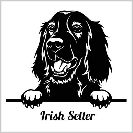 Irish Setter - Peeking Dogs - breed face head isolated on white