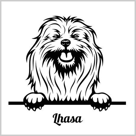 Lhasa - Peeking Dogs - breed face head isolated on white Illustration