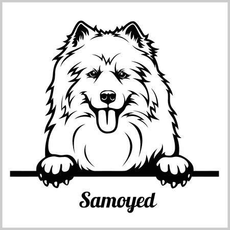 Samoyed - Peeking Dogs - breed face head isolated on white
