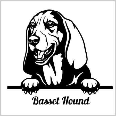 Basset Hound - cani che sbirciano - testa di faccia di razza isolata su bianco