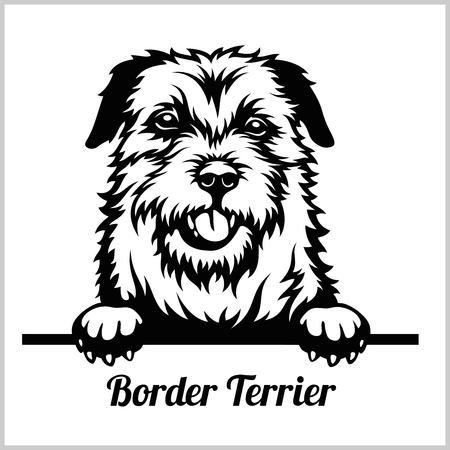 Border Terrier - Peeking Dogs - breed face head isolated on white Illustration