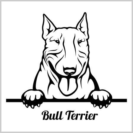 Bull Terrier - Peeking Dogs - breed face head isolated on white