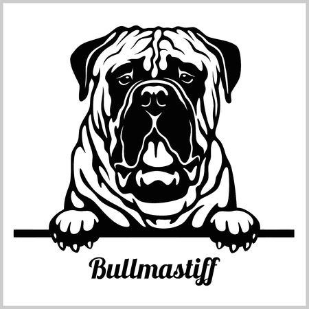 Bullmastiff - Peeking Dogs - breed face head isolated on white