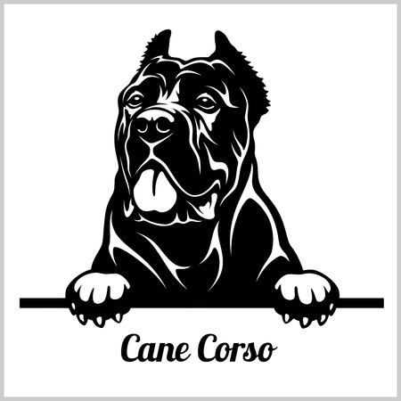 Cane Corso - Peeking Dogs - tête de visage de race isolated on white