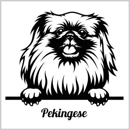 Pekingese - Peeking Dogs - breed face head isolated on white 矢量图片