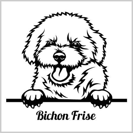 Bichon Frise - Peeking Dogs - breed face head isolated on white