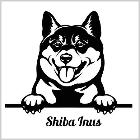 Shiba Inus - Peeking Dogs - breed face head isolated on white