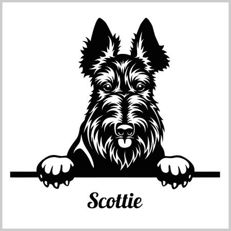 Scottie - Peeking Dogs - breed face head isolated on white