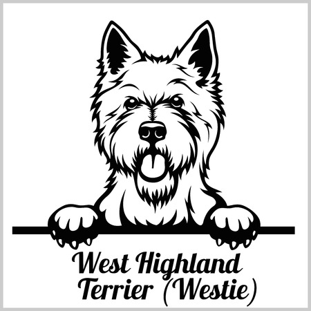 West Highland Terrier - Peeking Dogs - breed face head isolated on white