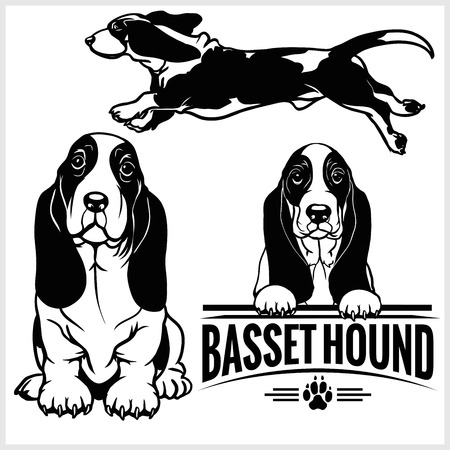 Basset Hound dog - vector set isolated illustration on white background