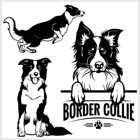 Border Collie dog - vector set isolated illustration in black on white background