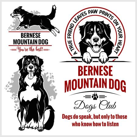 Bernese Mountain Dog - vector set for t-shirt, logo and template badges