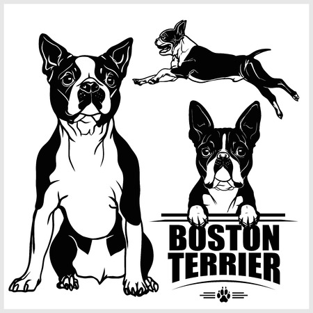 Boston Terrier dog - vector set isolated illustration on white background