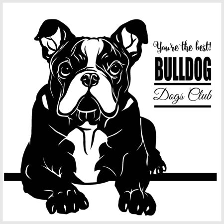 Bulldog - vector illustration for t-shirt and template badges Ilustrace