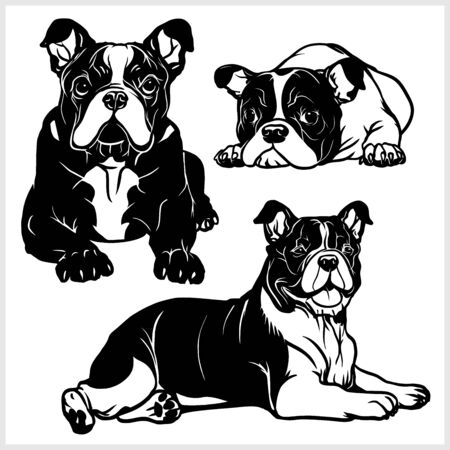 Bulldog - vector illustration for t-shirt and template badges Illustration