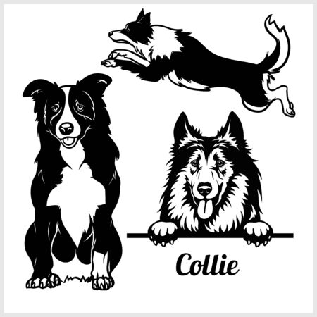 Collie - vector illustration for t-shirt and template badges