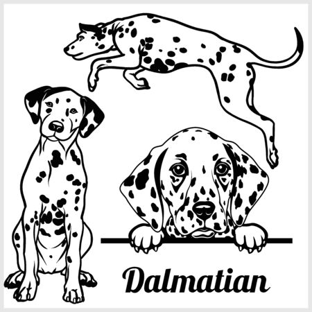 Dalmatian - vector illustration for t-shirt and template badges Ilustrace