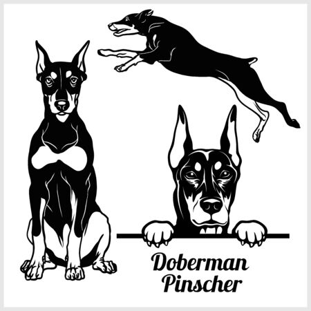 Doberman Pinscher - vector illustration for t-shirt and template badges