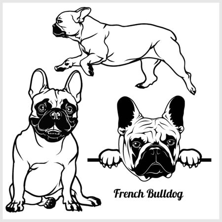 French Bulldog - vector illustration for t-shirt and template badges